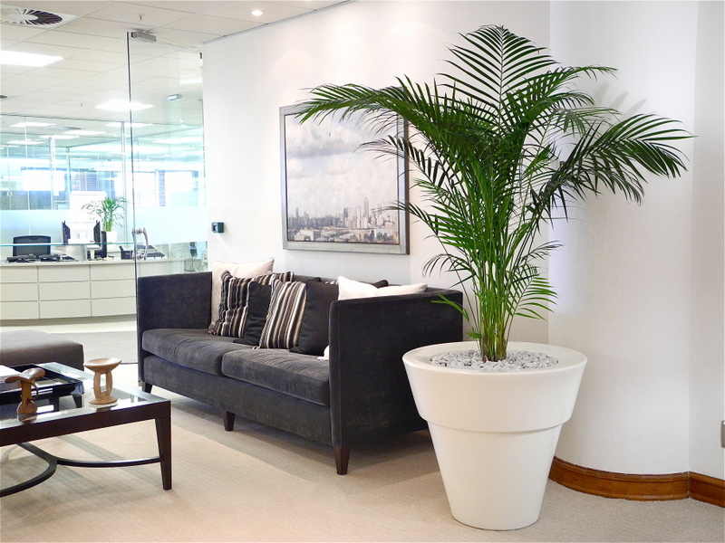 indoor plant hire office indoor plants57 plants